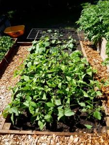 garden38